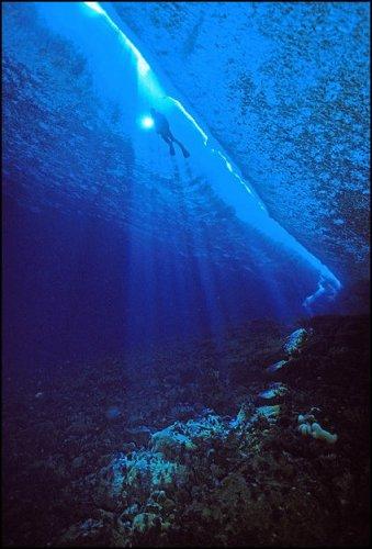 Подводный мир Антарктиды от Norbert Wu
