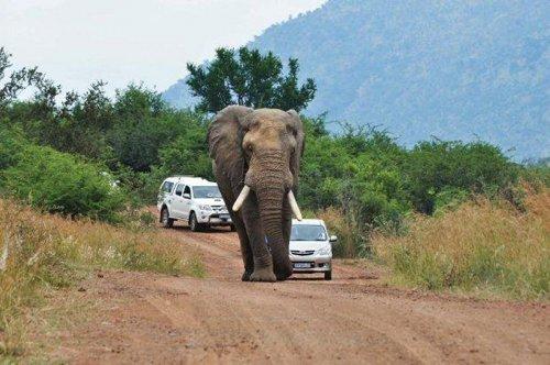 Не шутите со слоном :)