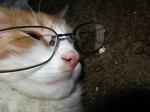 Коты в очках
