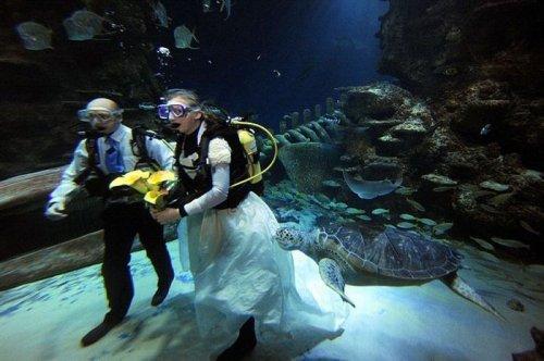 Свадьба среди черепах