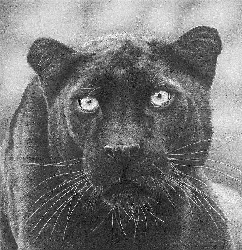 Картинки с пантерами графикой