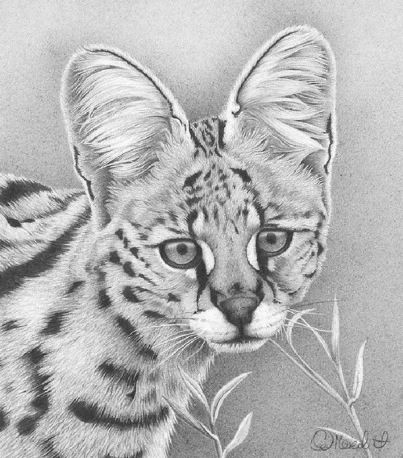 Картинки красивые животных карандашом, для