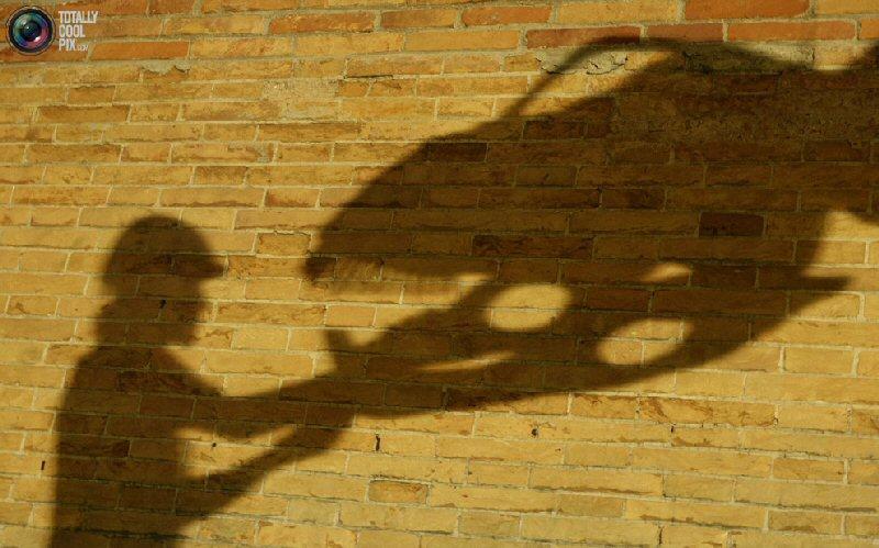 cool shadows