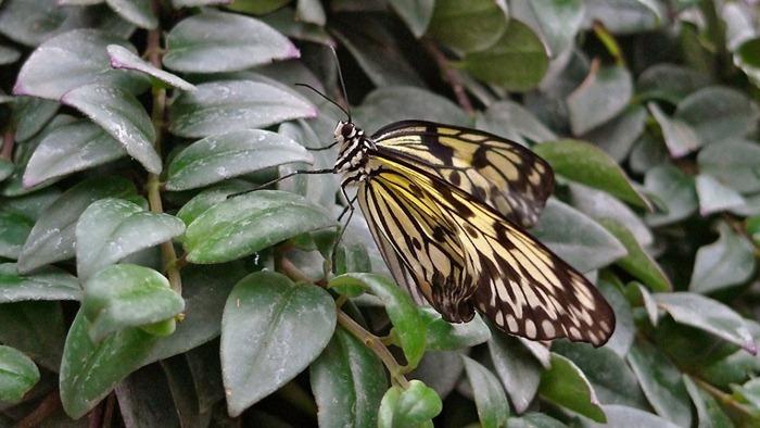 Красивейшие бабочки нашей планеты