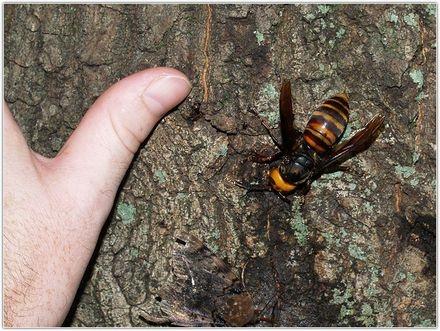 5 видов самых опасных насекомых