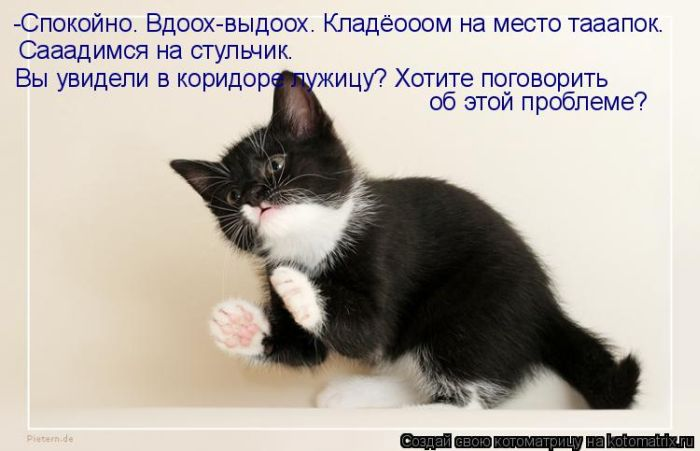 http://www.bugaga.ru/uploads/posts/2011-03/1299810386_kotomatritsa-15.jpg