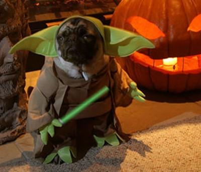 Забавные животные в костюмах героев Звездных Войн