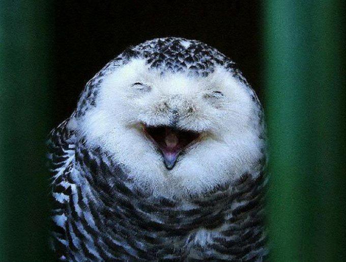 совы смеются картинки которую вернули нигерию