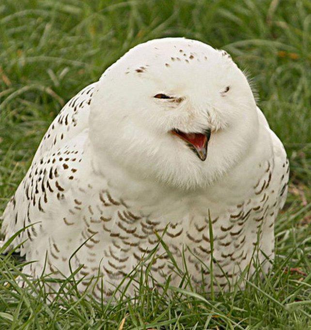 выгодной картинки смеющихся птиц твёрдой фотообложке