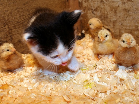 Дружба в мире животных
