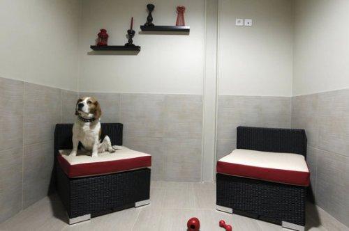 Первый в Европе отель для собак класса люкс