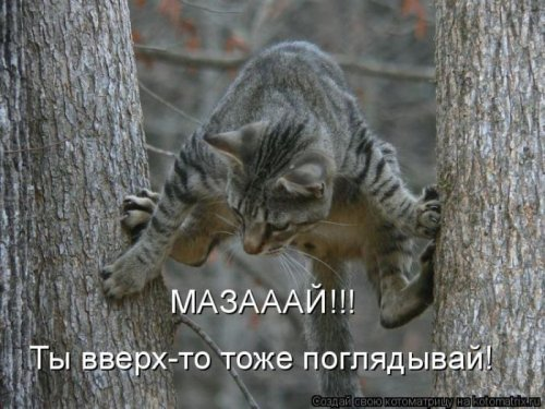 1299228314_kotomatritsa-7.jpg