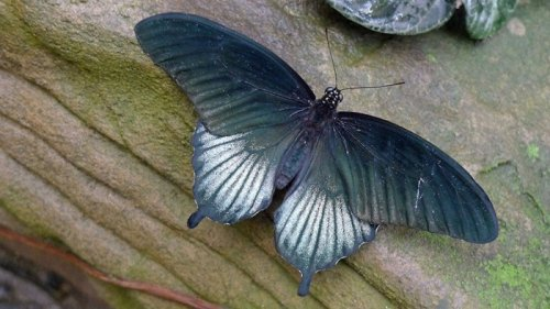Выставка бабочек в Великобритании