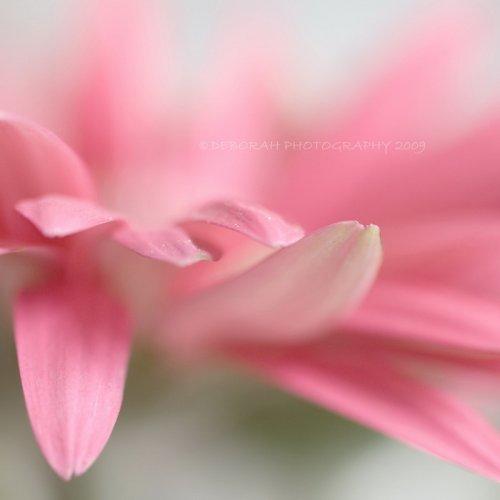 Нежные цветы от dhmig