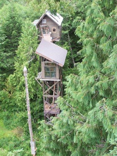 Стремные дома на деревьях