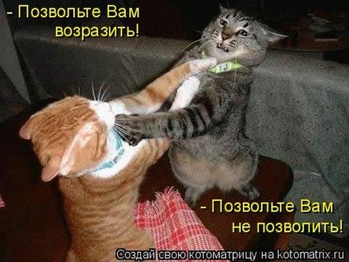 http://www.bugaga.ru/uploads/posts/2011-03/thumbs/1299810352_kotomatritsa-4.jpg