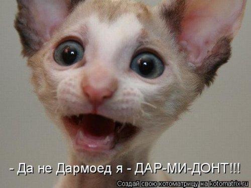 Кото-приколы =)))