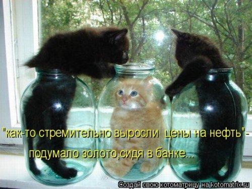 Прикольная котоматрица за неделю