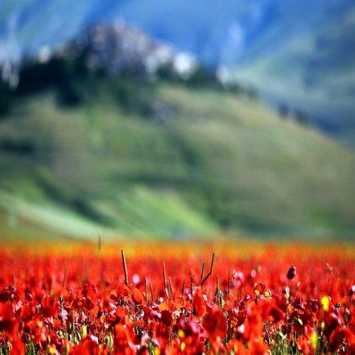 Фотографии природы от Edmondo Senatore