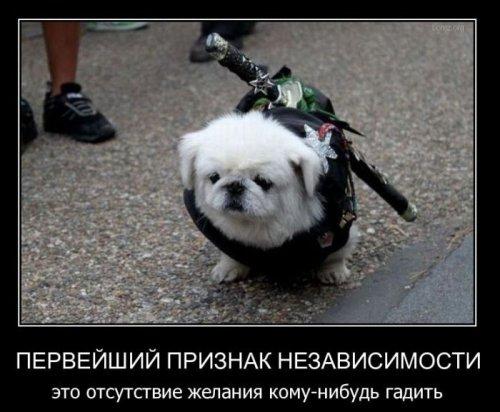 http://www.bugaga.ru/uploads/posts/2011-03/thumbs/1300171824_demo-2.jpg
