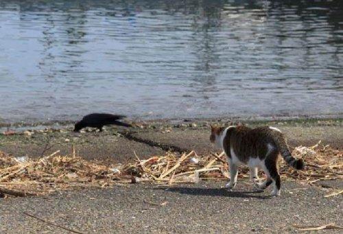 Легкая добыча кота
