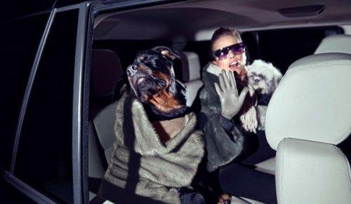 Реклама меховой одежды для собак