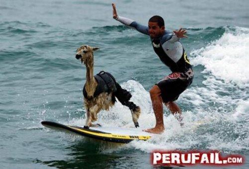 Прикольные фейлы из Перу