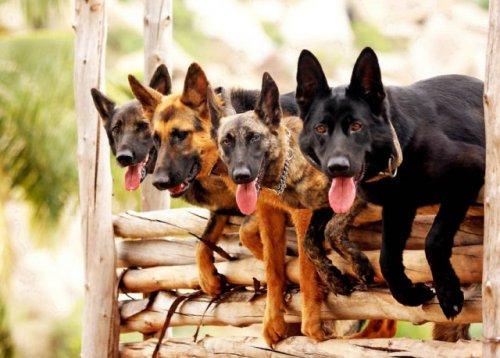 Собачий Спецназ