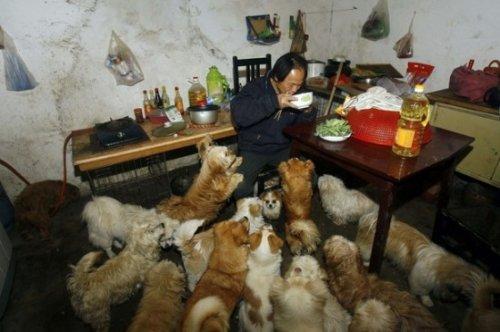 140 бездомных собак и один китаец