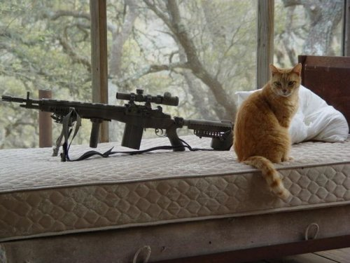 Вооруженные домашние питомцы