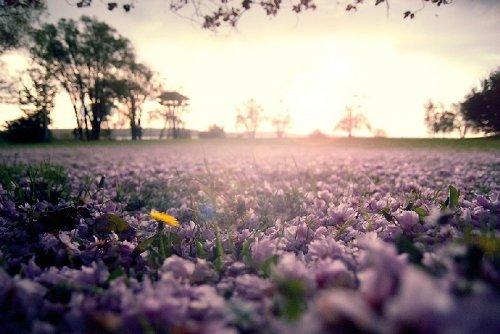 Сочные краски весны