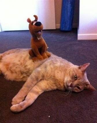 Равнодушные коты