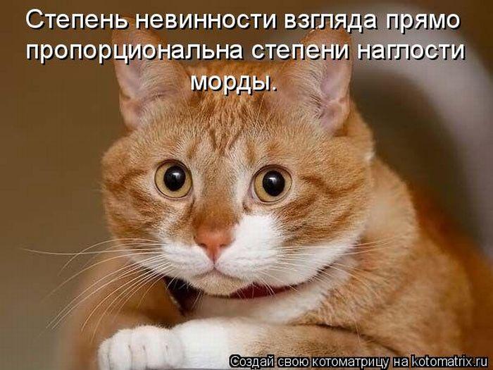 http://www.bugaga.ru/uploads/posts/2011-04/1303427698_kotomatritsa-12.jpg