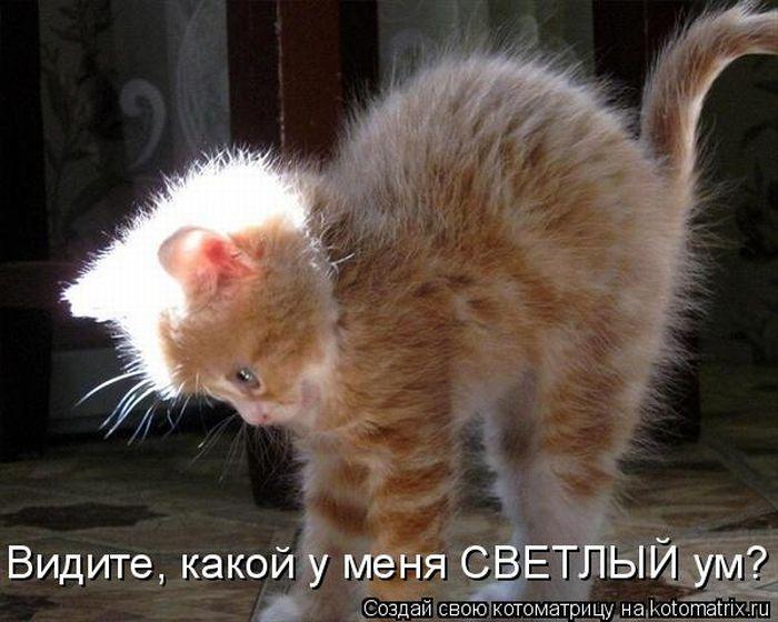 котоматрица приколы: