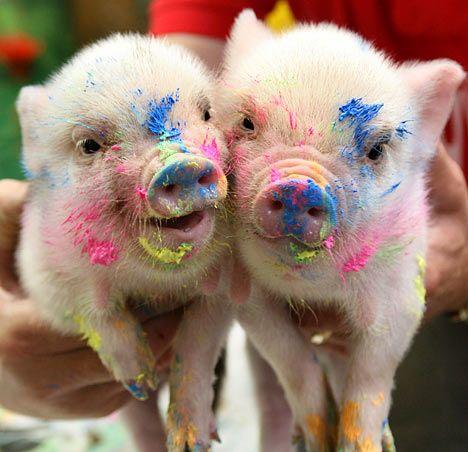 Свинки Пикассо (4 фото)
