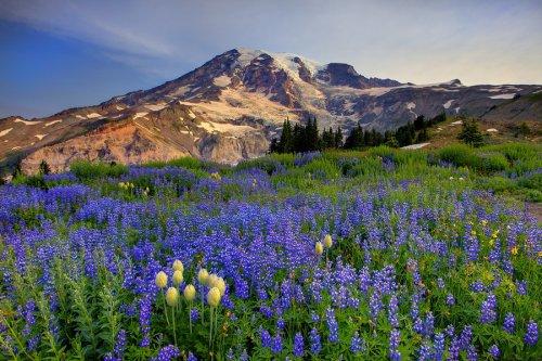 Национальный парк Олимпик от Kevin McNeal