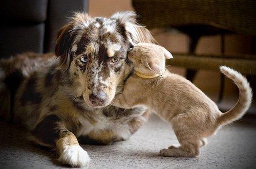 Забавное общение животных