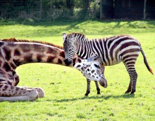 Милые и смешные животные