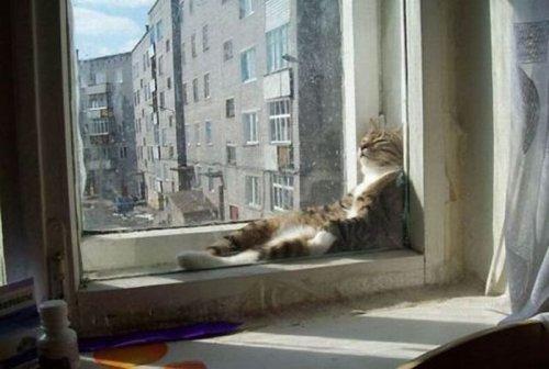 Коты в нелепых позах