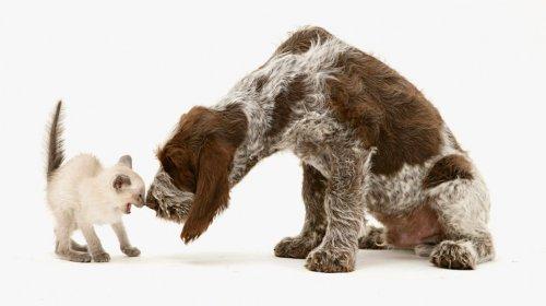 Прикольные животные от Jane Burton