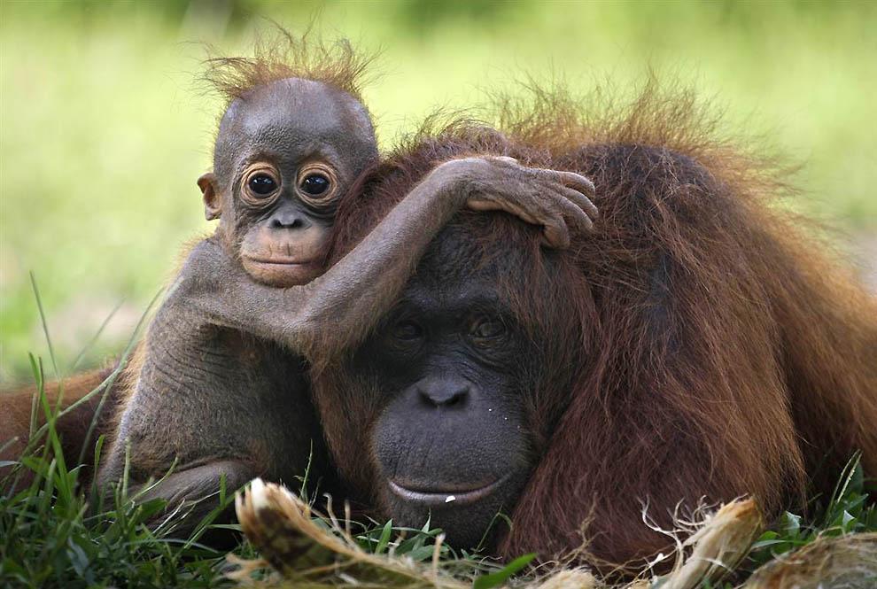 Фотографии животных с детенышами