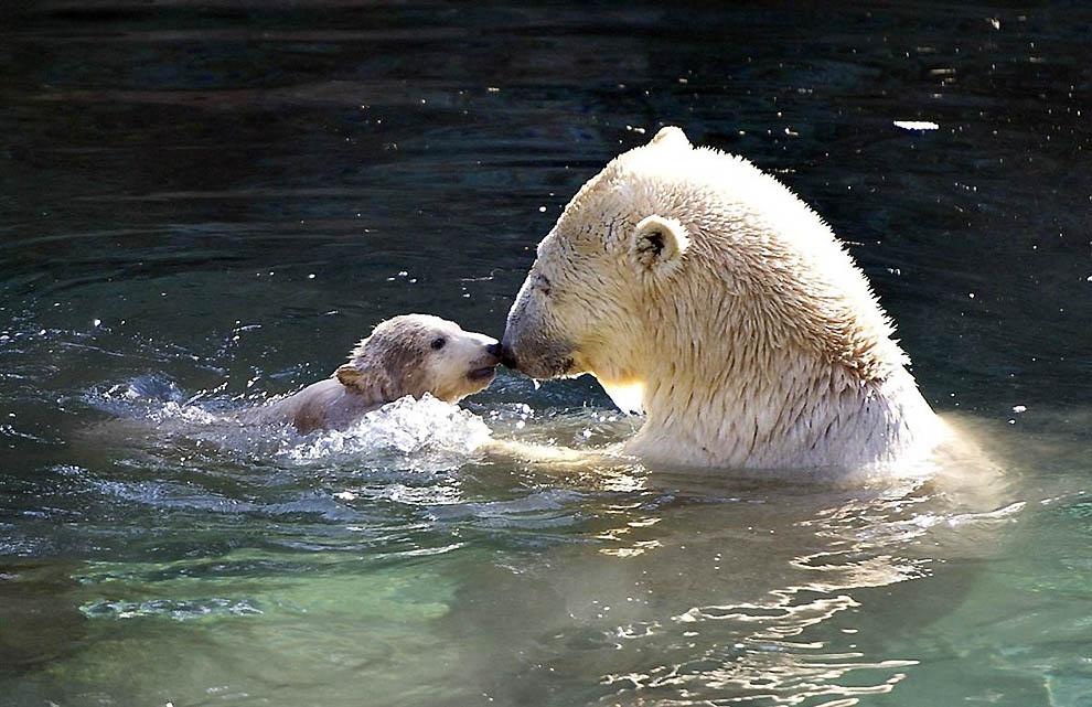 картинки умывающихся медвежат выбираем витрину