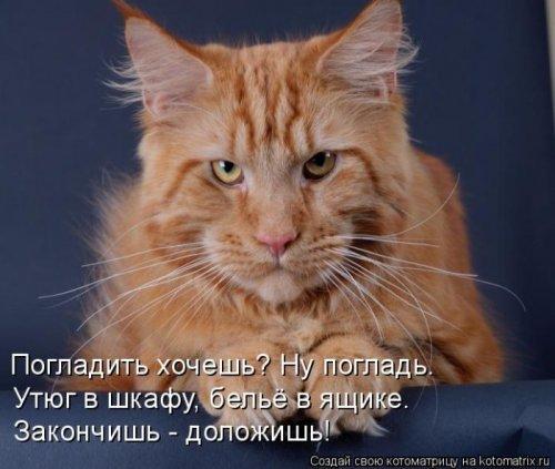 Главная котоматрица