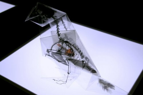 Оригами-скелеты исчезающих животных