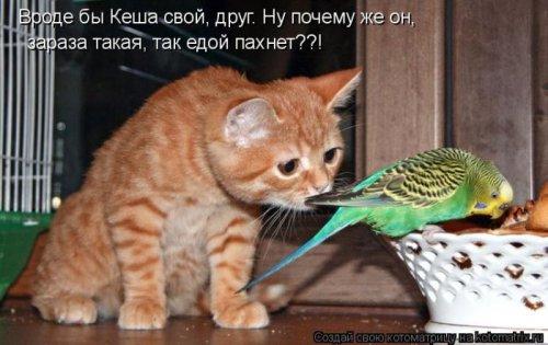 Веселая котоматрица