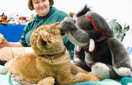 Животные и мягкие игрушки