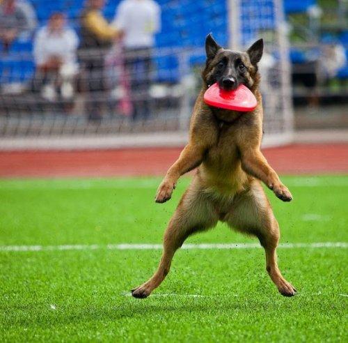 Забавные фотожабы про собаку