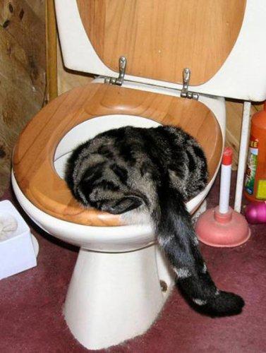 Фотожаба: Кот в унитазе
