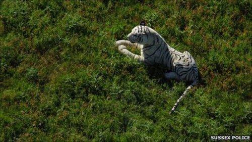 Белый тигр на поле для игры в крикет