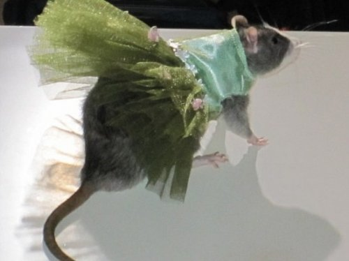 Коллекция одежды для крыс